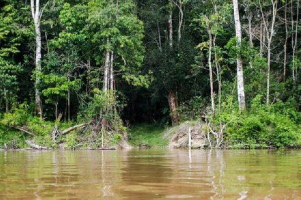 Código Florestal define faixa não edificável a partir de curso d'água em áreas urbanas, decide Primeira Seção