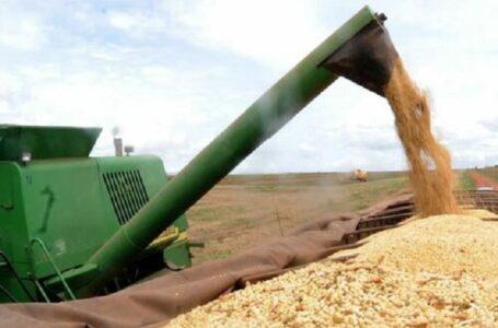 Produtores acreditam em perdas maiores na safra do milho