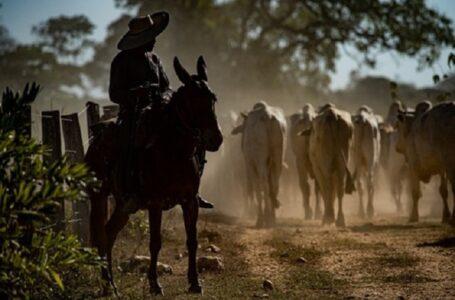 Financiamentos aos produtores rurais e empreendedores do Pantanal ultrapassam R$ 123 milhões no primeiro trimestre