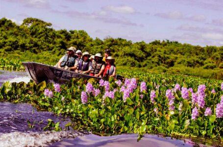 Secretaria Adjunta promove rodada de negócios para estimular retomada do turismo em MT