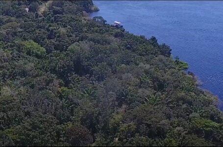Criptomoeda é lançada com proposta inédita de proteger a floresta amazônica, preservar áreas indígenas e apoiar ao empreendedorismo local